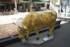 madison cows 016