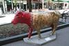 madison cows 015