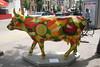 madison cows 003