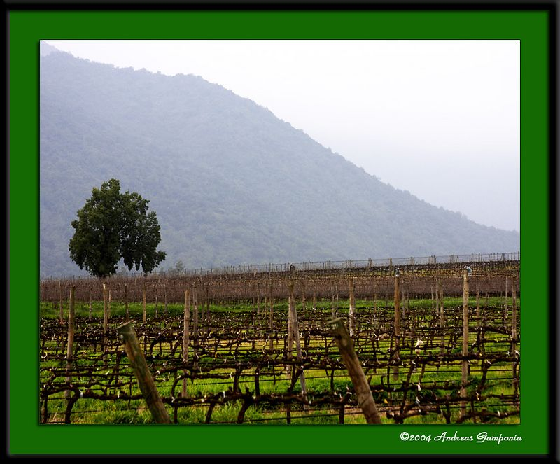 Chilean wine country....