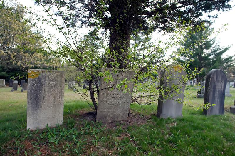Vampire Cemetery