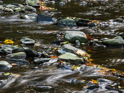 Fall at Goldstream