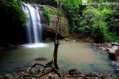 IMG_2490_Buderim State Forest - QLD
