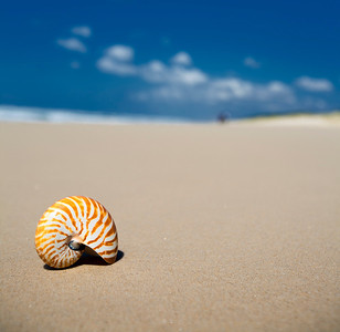 IMG_9040 Stradbroke Island - QLD