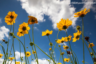 IMG_3820_Wildflowers