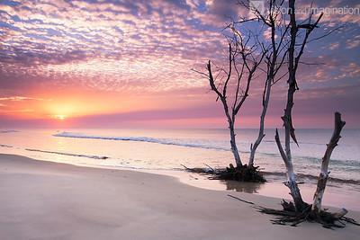 IMG_7017 Moreton Island - QLD