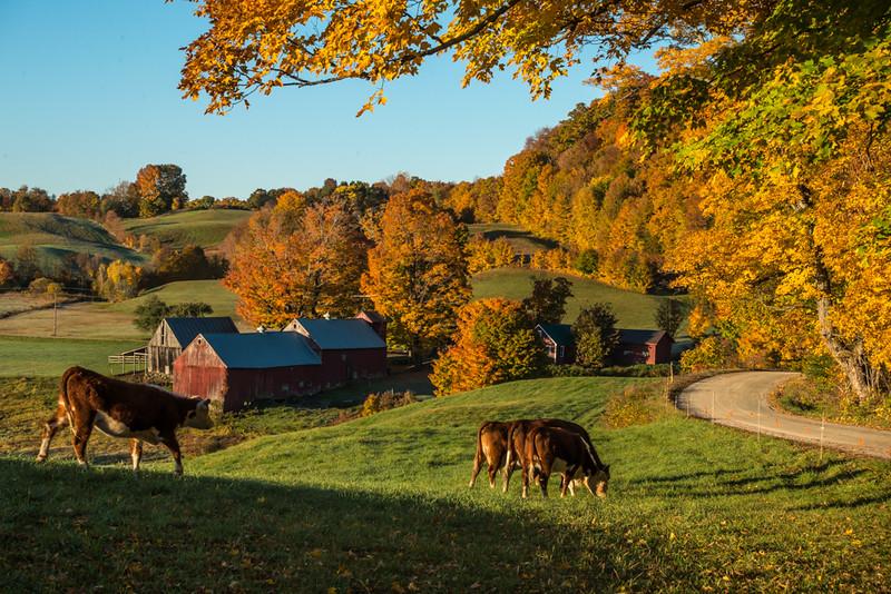 Early morning at Jenne Farm