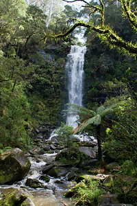 Erskine Falls near Lorne, a small town on the Great Ocean Road that runs from Torquay [near Melbourne] west all the way to Warrnambool, 243 km away.