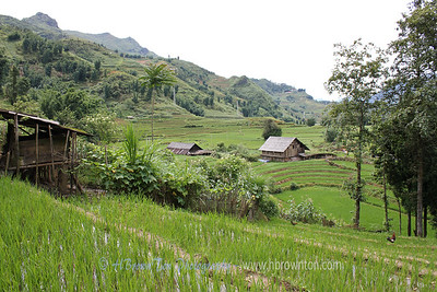 Farm near Cat Cat Village