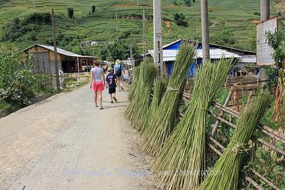 Hemp stalks used for weaving Hmong clothing
