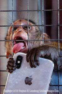 I LOVE my I-Phone X   Copyright 2018 Steve Leimberg UnSeenImages Com _DSC0382