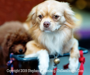 Two Dogs - Copyright 2018 Steve Leimberg UnSeenImages Com _DSF9698 (1)