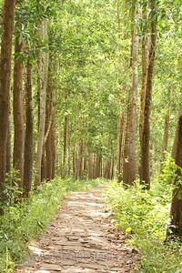 A tranquil walk. My Son, Vietnam