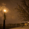 Light-Post and Tree. Richmond, VA. 2009