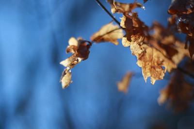 125 Leaves