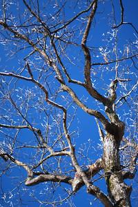 100 Tree