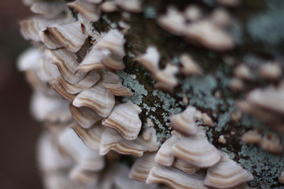 19 Shelf Fungus