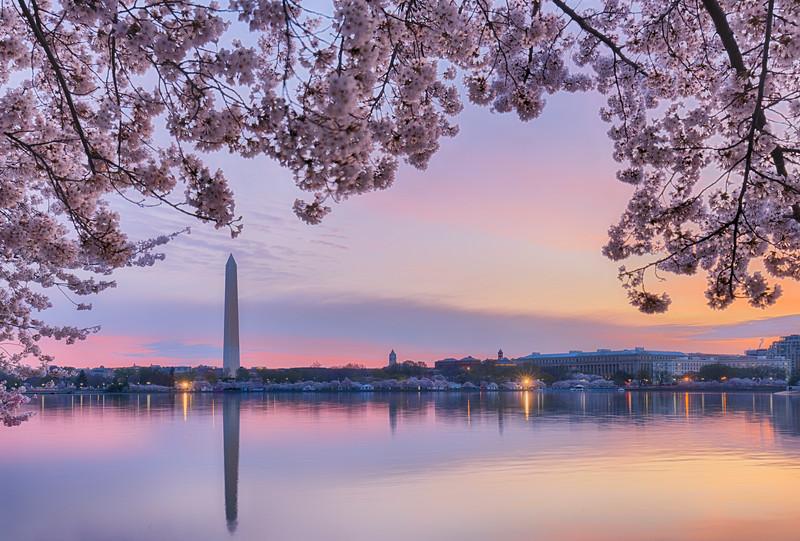 cherry blossoms Monument_DSC8867