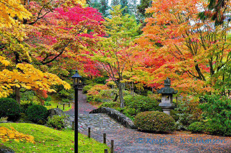 Japanese Garden, Arboretum