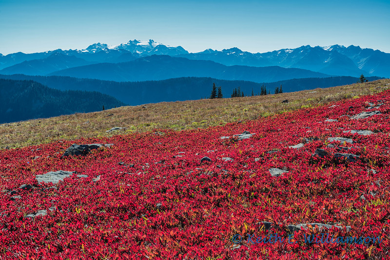 Mount Olympus, as seen from Obstruction Point, Olympic National Park.  Fall colors appear as early as the second week in September.  The colors really were this vivid - it was stunning.