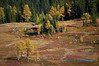 Larch trees and meadow in the fall, Hart's Pass
