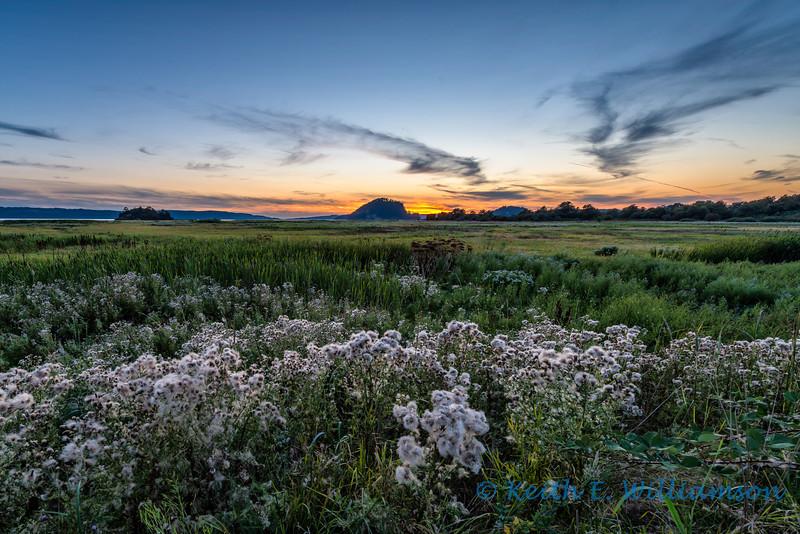 Sunset, Fir Island