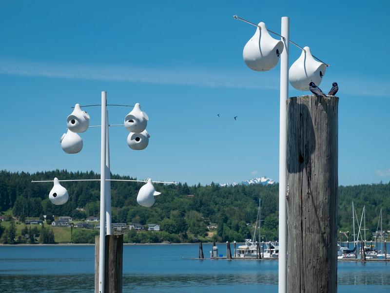 Purple Martin homes