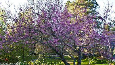 Bellevue Botanical Garden