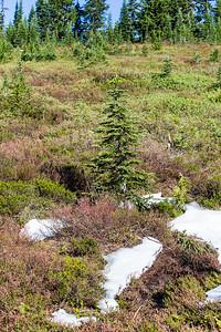 Mount Ranier -0099