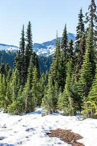 Mount Ranier -0103