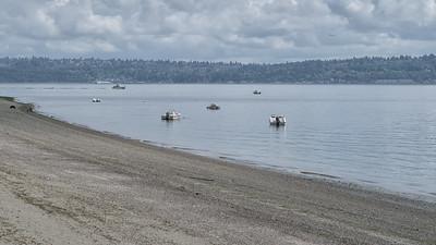 20150815.  Puget Sound beach southwest of Dolphin Point, Vashon Island, WA.