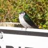 Whidbey Island -0124