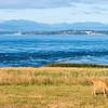 Whidbey Island -0033
