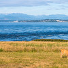 Whidbey Island -0034