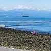 Whidbey Island -0252
