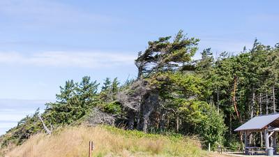 Whidbey Island -0225