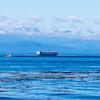 Whidbey Island -0254