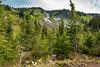 Subalpine Forest