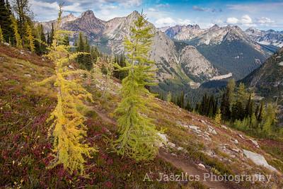 Alpine Larches