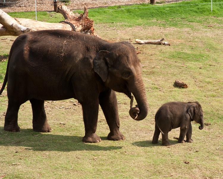 Elephants at The Oklahoma City Zoo