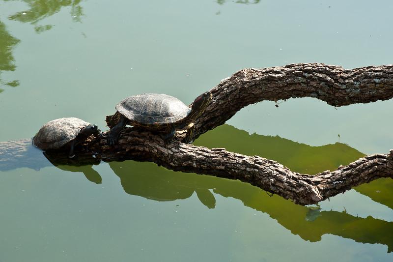 Turtles at The Oklahoma City Zoo