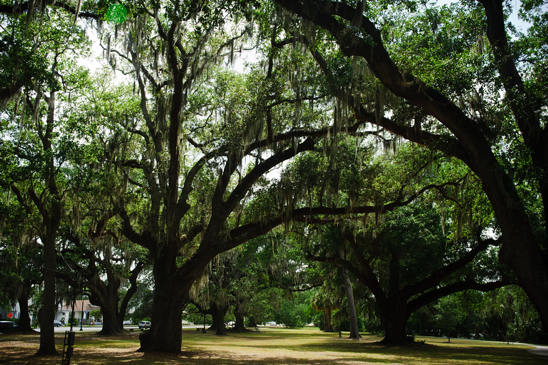 Trees in a park in NOLA