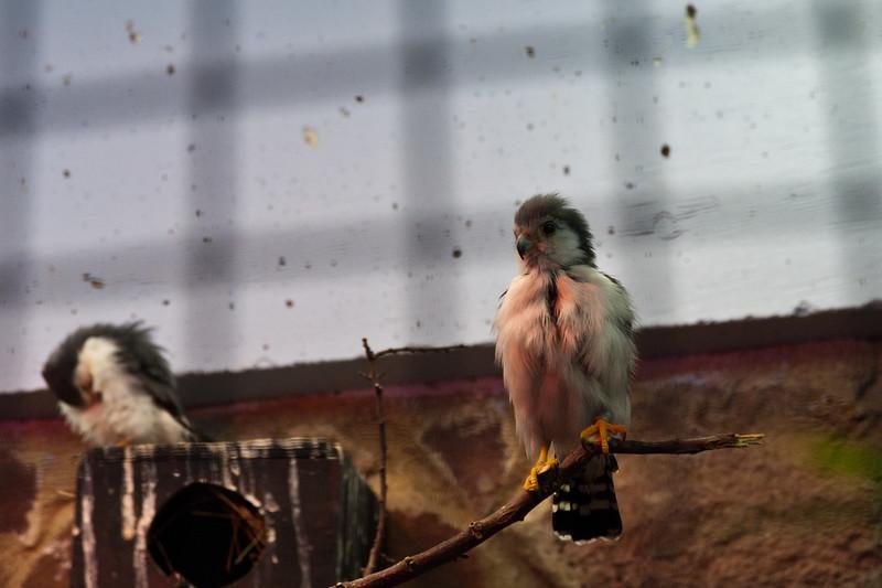 Baby birds at The Oklahoma City Zoo