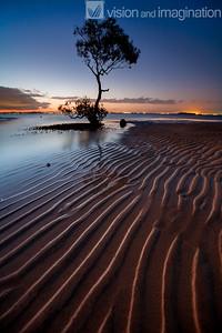 IMG_0826 Wellington Point Mangrove Tree