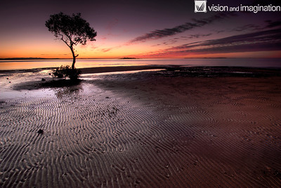 Mangrove Tree on a sand bank after sunset
