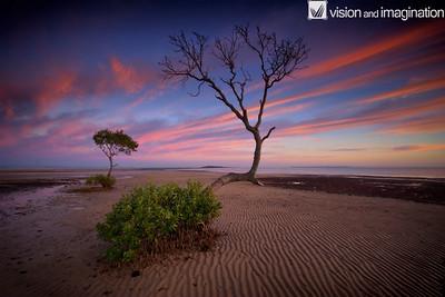Majestic Tree - Wellington Point QLD