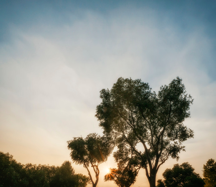 Tree Shine