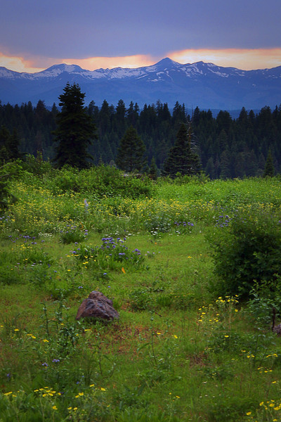 Mountain meadow at dusk.