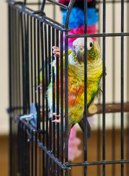 Biology department showed some interesting birds' behavior