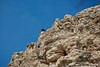 Captured in area around Montezuma's Castle (Anasazi Ruins)